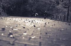 咻! (lgf55555(基福)) Tags: 風 葉 路磚 孤獨的人 黑白