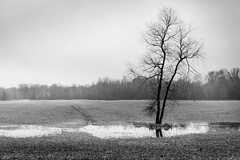 end of snow (Christian Collins) Tags: canoneos5dmarkiv bw blacknwhite field tree snow water reflection deer woods fog michigan midmichigan spring winter march marzo invierno midland