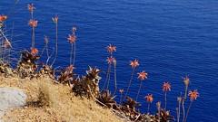 """Flowers in Port de Soller (dreptacz) Tags: """"flickrtravelaward"""" kwiaty morze woda niebieski pomarańczowy brzeg klif majorka hiszpania sony slt55 lustrzanka worldtrekker astoundingimage"""