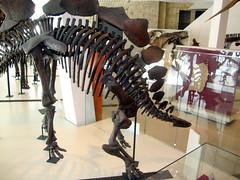 Stegosaurus (Hydra5) Tags: stegosaurus rom royalontariomuseum dinosaur