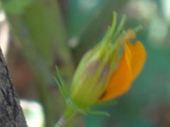 DSC00192 (familiapratta) Tags: sony dschx100v hx100v iso100 natureza flor flores nature flower flowers