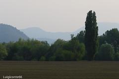 imbrunire (conteluigi66) Tags: prato pianura imbrunire field green verde albero alberi monti mountains paesaggio landscape luigiconte
