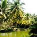 Kerala, Land of Coconut trees.