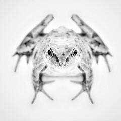 Frog (LondonCamera) Tags: blackandwhite bw animal wildlife amphibian frog toad highkeylighting