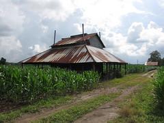 Tobacco Barn (2) (Gerry Dincher) Tags: robesoncounty tobaccobarn tobacco tobaccofarm tobaccoroad northcarolina usroute301 stpauls tinroof rusty farm farmers farming familyfarm gerrydincher