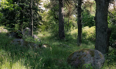 In the green (Chin Li Zhi) Tags: trees shadow summer plants sun sunlight green grass forest outdoors moss bush rocks sweden stockholm shade trunk