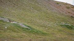 Треккинг вокруг Дарчена в Тибете
