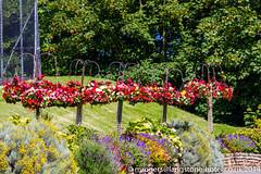 2014-06-12_15-43-34-7D-6969-ewf (mark@langstone) Tags: flowers trees people june guests woodland hotel unitedkingdom lawn devon verandah grounds seaview 2014 dawlish