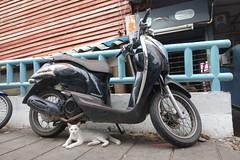 white cat, black motorcycle (the foreign photographer - ) Tags: bridge white black cat thailand bangkok under motorcycle khlong bangkhen thanon