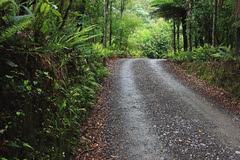 A special place (duncanmc42) Tags: road trees newzealand plants green nature forest bush flora track natural path reserve conservation trail vegetation southisland ferns bushes marlborough preserve shrubs ecosystem pelorusbridge