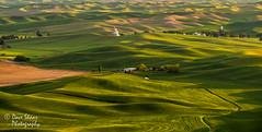 Velvet Fields (NW Vagabond) Tags: green washington shadows wheat farmland hills fields rolling goldenhour palouse 2014 steptoebutte