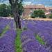 Frankreich - Provence Juli 2014