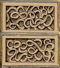 Anglų lietuvių žodynas. Žodis vermivorous reiškia a mintantis kirmėlėmis (apie paukščius) lietuviškai.