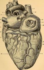 Anglų lietuvių žodynas. Žodis Eustachian reiškia a: Eustachian tube anat. Eustachijaus vamzdis, ausies trimitas lietuviškai.