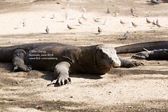 8H3A7044s (Wei on the way) Tags: canon indonesia nationalpark wideangle np komodo komododragon liveaboard aggressor landexcursion