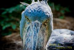 (2012 07 15)DSC_0695.jpg (isakachi1986) Tags: animal   2012