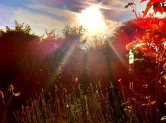 Début de crépuscule. (nic0v0dka) Tags: sunset soleil spider web crépuscule couchant araignée toile
