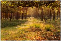 Autumn comes: veluwe (H. Bos) Tags: autumn nature season woods herfst natuur bos veluwe warmlight herfstlicht bossen dutchlight seizoen beekbergen autumnleafs hollandslicht herstbladeren warmlicht