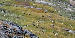 Al Vach - Monte Vago (SO) (Giorsch) Tags: italia italy italien langbeardnaland lombardei provinciadisondrio livigno alvach montevago lachdalvach alpensee lake alpi alps alpen passodellaforcola valdallaforcola valtellina veltlin lagovago lago bergsee outdoor berge montain montainhike