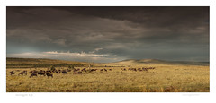 serengeti (paolo paccagnella) Tags: africa light sky clouds paolo ngc p ngg dcm africansky mandria paccagnella gnù canoneos7dmk1 phpph©2014