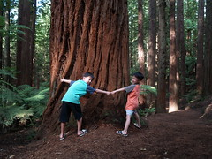 NZ Redwoods (dam.dong) Tags: travel jin nz redwoods min e500