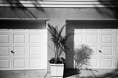 Outside My Garage (jessi_lembo) Tags: summer blackandwhite bw house plant fern film home 35mm outside newjersey garage nj documentary 35mmfilm brielle blackandwhitefilm visualdiary briellenj