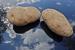 Two Potatoes on the Hood of a Car (ricko) Tags: reflections potatos carhood