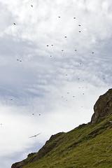 Alarm! (Pavel Vanik) Tags: mountains alps bird alarm plane canon schweiz switzerland suisse swiss 7d alpen glider alpi wallis alert valais galm 1018is