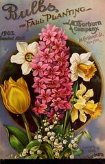 n92_w1150 (BioDivLibrary) Tags: flowers trees newyork vegetables tulips newyorkstate daffodils hyacinth catalogs nurserystock nurserieshorticulture bulbsplants mertzlibrarythenewyorkbotanicalgarden thorburnjmco bhl:page=45199230 dc:identifier=httpbiodiversitylibraryorgpage45199230 bhlgardenstories bhlinbloom