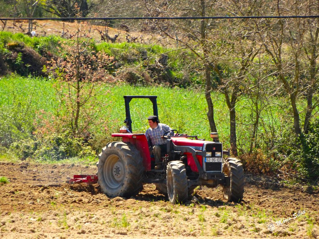 Águas Frias (Chaves) - ...lavrando a terra ...
