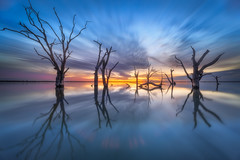 12mm horizon (Dylan Toh) Tags: lakebonney nisi astro australia australian dawn everlook landscape laowa milkyway night nightfilter photography southaustralia