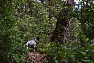 Blanca on Humbug Mountain