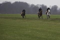 Noah and Rosie (Daniela Bowker) Tags: horse pony gallop work newmarket heath newmarketheath cambridgeroad