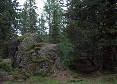 02-IMG_8423 (hemingwayfoto) Tags: österreich austria baum blockwald europa fichte hohetauern landschaft nationalpark natur naturschutzgebiet rauris rauriserurwald reise stein tannenbaum urwald wald