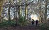Bloodhound Wood Jan 2017 (dumbmilo1) Tags: forest wood trees kids summicronm apo sony a7ii sunday 90mm f28