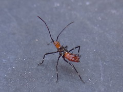 DSC00021 (familiapratta) Tags: sony dschx100v hx100v iso100 natureza inseto insetos nature insect insects