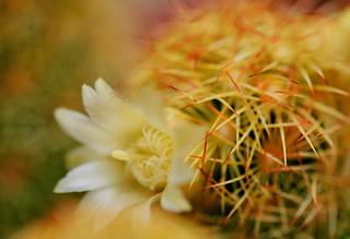 flower 350