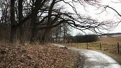 Chill (4niki) Tags: 4niki patrik christian modée sony a7 super takumar f18 55mm stockholm spring trees oak ek träd dirt road skogsväg fence stängsel leafs löv svartsjö slott