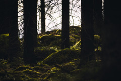 Beyond the hill (Superfantti) Tags: hill rocks light sunlight sun rays sunrays moss tree trees forest nature woods wood rock stone sticks branches edge dof green soft ground windy rainy day rainyday roots peace solitude finland
