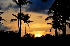 sim. país tropical!!! (Ruby Ferreira ®) Tags: pôrdosol sunset silhuetas silhouettes northeastbrazilian palmtrees