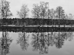 Ein Blick zur Mittelerde / A view to Middle-earth (r.stopable1) Tags: spiegelungen reflections schwarzweiss blackwhite monochrome bw wasserlandschaft waterlandscape natur nature wasser water einfarbig bäume trees blackandwhite