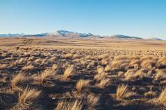 tekapo ~ lake pukaki (Le Fabuleux Destin d'Amélie) Tags: tekapo lakepukaki southisland grasses southernalps mountains