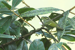 IMG_7815_DS (Ganugapenta NaveenKumar Reddy) Tags: northeast northeastindia mishmihills canon7d disnapper guyonblackybx gnaveenkumarreddy ganugapentanaveenkumarreddy gnr ganugapenta
