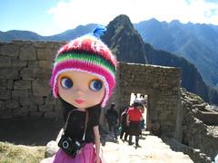 Goldie in Machu Picchu