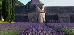 FRANCE - Provence, Zisterzienser-Abtei de Snanque, Ein Fest fr Augen und Sinne, 12007/3644 (roba66) Tags: france abbey frankreich purple lavender lila provence blau kloster abbaye lavendel abtei monastire zisterzienzerkloster