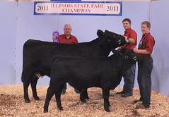 "Champion Young Perf. Cow/calf AOB Jr. Show; Grand Champion % Simmental Cow/Calf Open '11 IL State Fair • <a style=""font-size:0.8em;"" href=""http://www.flickr.com/photos/25423792@N05/14436116272/"" target=""_blank"">View on Flickr</a>"