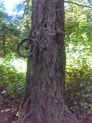 The Bicycle Tree (eldan) Tags: