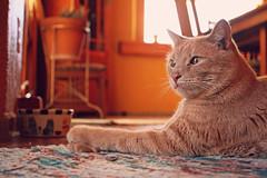 (K. Sawyer Photography) Tags: animal cat bowl rug placitasnewmexico