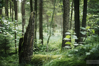 Forest Deeps