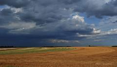 Fin d'après-midi en Beauce (Hélène Quintaine) Tags: france nature ciel nuage champ beauce blé essonne sudessonne laforêtstecroix